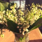konwalia lilyofthevalley spring flowers nature beautiful polonization poland